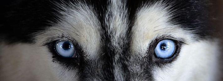 pomoc_psům_v_útulku_jak_pomoci_psovi_z_útulku_dobrovolnictví_útulek4