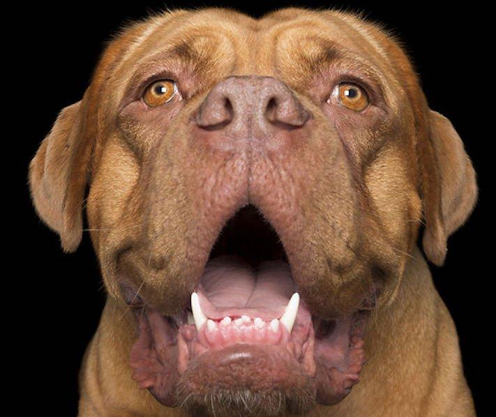 psí_úsměv_pes_se_směje_smějící_se_pes_úsměv_psa_obrázky2