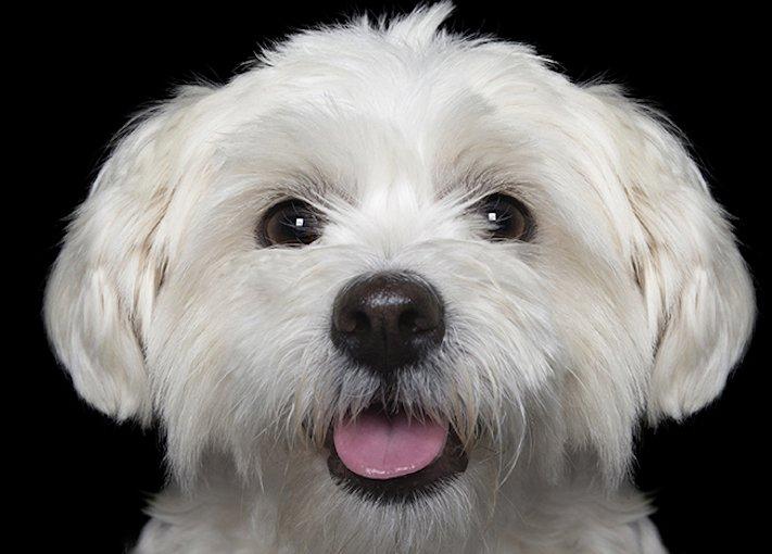 psí_úsměv_pes_se_směje_smějící_se_pes_úsměv_psa_obrázky4
