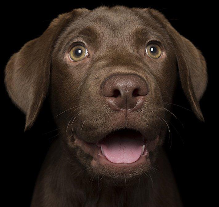 psí_úsměv_pes_se_směje_smějící_se_pes_úsměv_psa_obrázky10