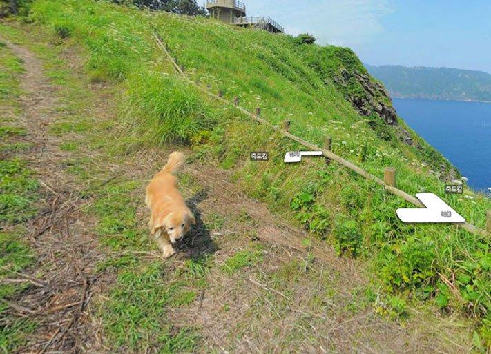 google obrázky pes zlatý retrívr na ve mapě street view obrázky se psy psů retrívrem1