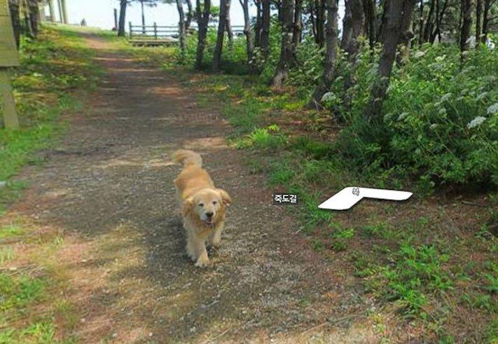 google obrázky pes zlatý retrívr na ve mapě street view obrázky se psy psů retrívrem2