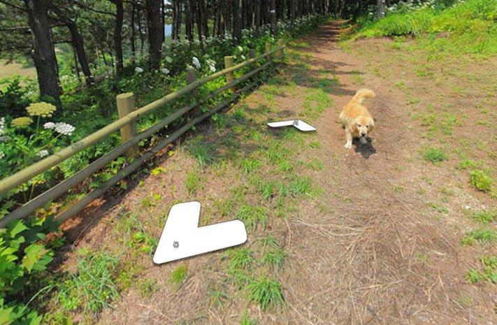 google obrázky pes zlatý retrívr na ve mapě street view obrázky se psy psů retrívrem3