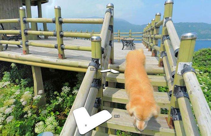 google obrázky pes zlatý retrívr na ve mapě street view obrázky se psy psů retrívrem4