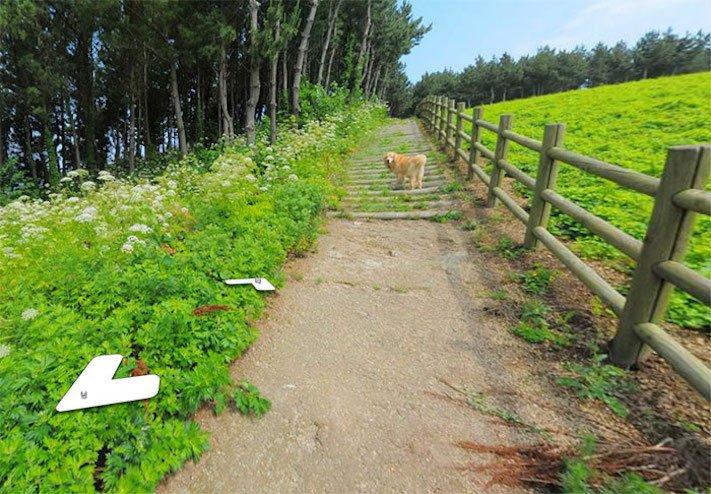 google obrázky pes zlatý retrívr na ve mapě street view obrázky se psy psů retrívrem5