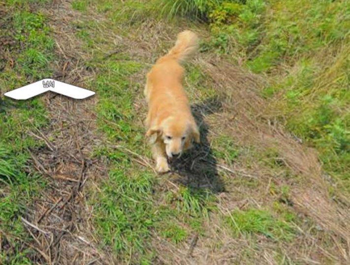 google obrázky pes zlatý retrívr na ve mapě street view obrázky se psy psů retrívrem7