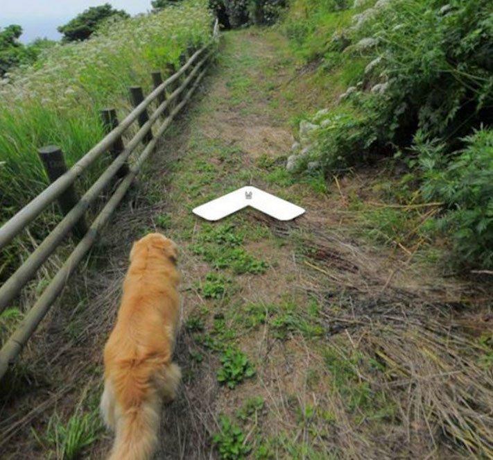 google obrázky pes zlatý retrívr na ve mapě street view obrázky se psy psů retrívrem6