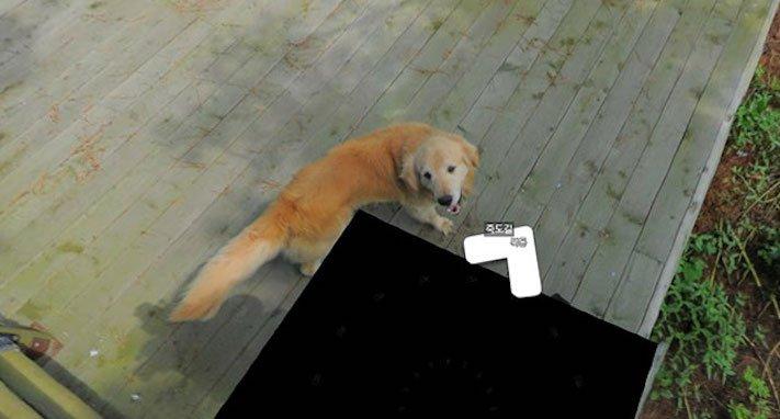 google obrázky pes zlatý retrívr na ve mapě street view obrázky se psy psů retrívrem8