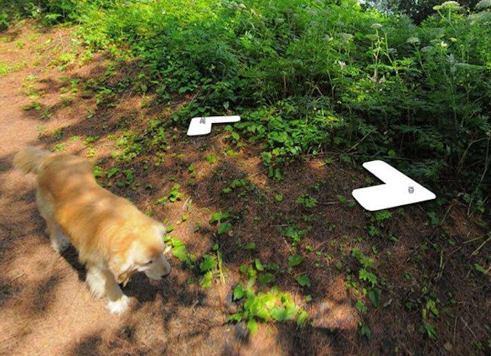 google obrázky pes zlatý retrívr na ve mapě street view obrázky se psy psů retrívrem9