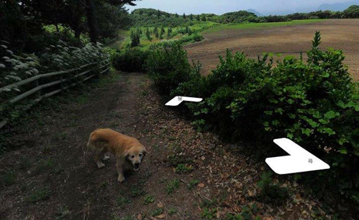 google obrázky pes zlatý retrívr na ve mapě street view obrázky se psy psů retrívrem10