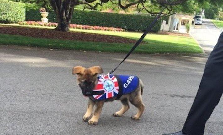 policejní pes německý ovčák nejlepší plemeno obrázky psí zkoušky policejních psů4b