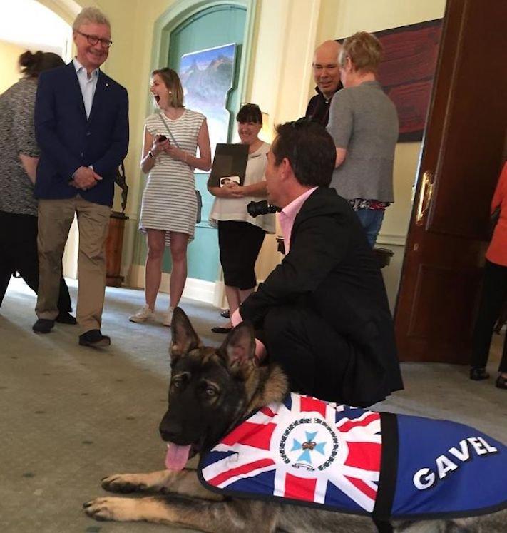 policejní pes německý ovčák nejlepší plemeno obrázky psí zkoušky policejních psů8