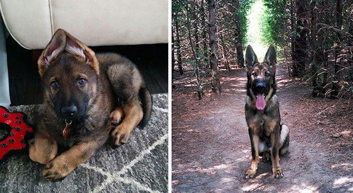 pes nejlepší přítel člověka vyrůstání dospívání psů obrázky fotografie jak rychle roste pes1