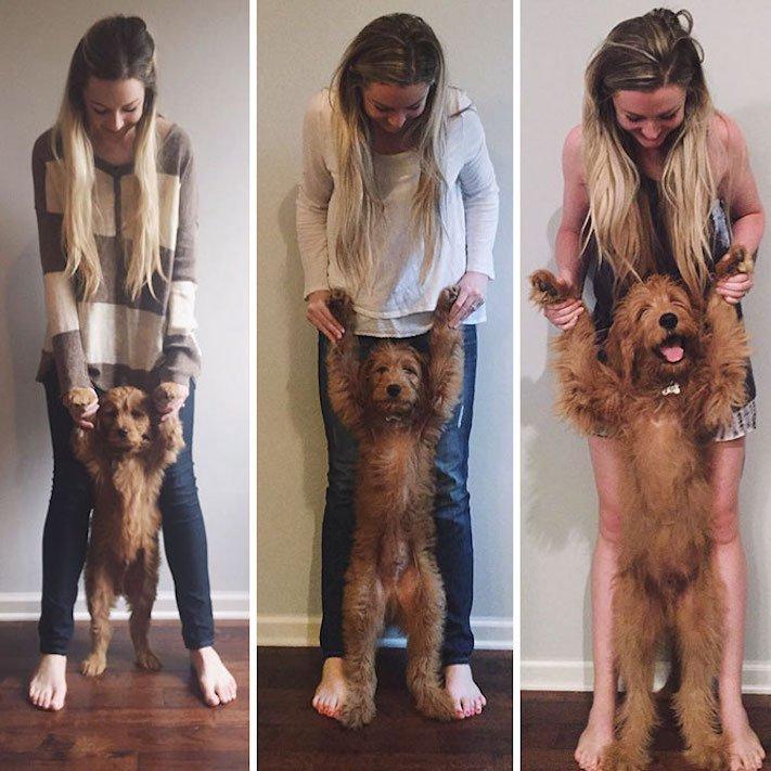 pes nejlepší přítel člověka vyrůstání dospívání psů obrázky fotografie jak rychle roste pes4