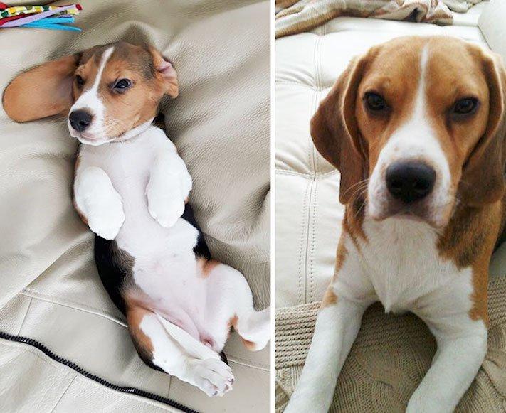 pes nejlepší přítel člověka vyrůstání dospívání psů obrázky fotografie jak rychle roste pes7