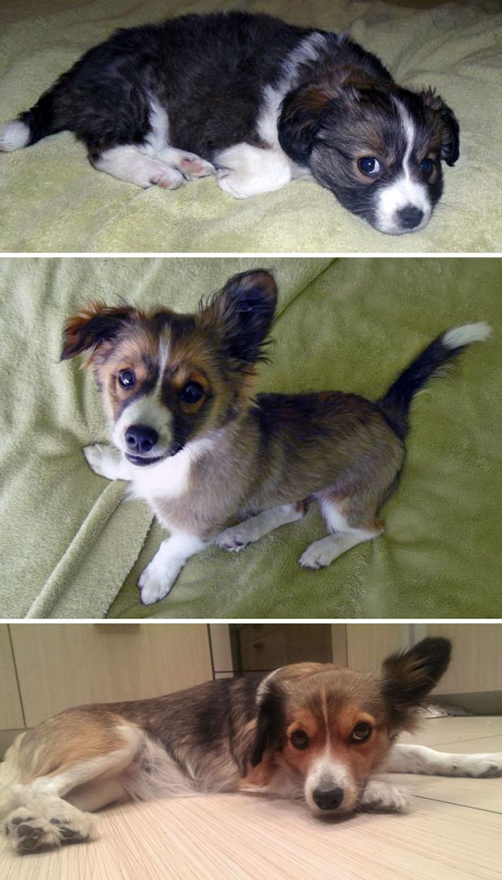 pes nejlepší přítel člověka vyrůstání dospívání psů obrázky fotografie jak rychle roste pes10