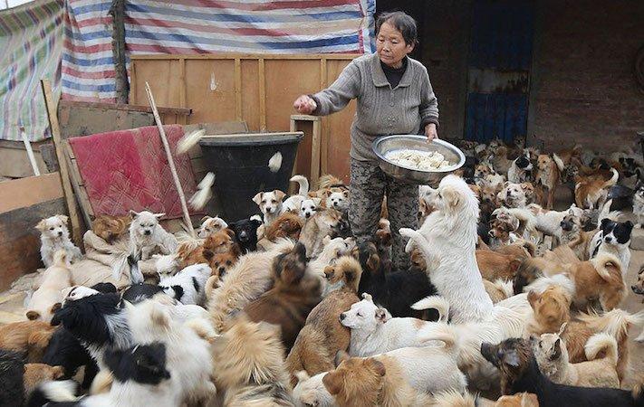 psi v číně pomoc psům v číně podmínky života azyl azyly pro psy čína1