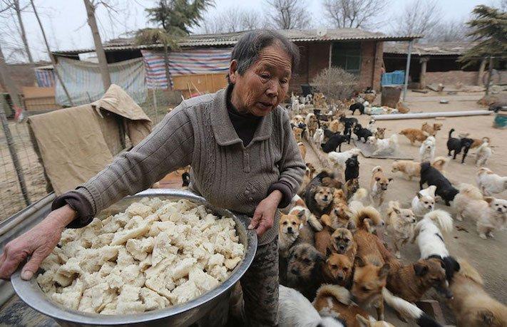 psi v číně pomoc psům v číně podmínky života azyl azyly pro psy čína2