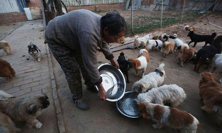 psi v číně pomoc psům v číně podmínky života azyl azyly pro psy čína3