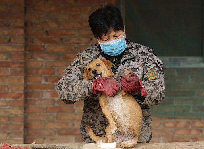psi v číně pomoc psům v číně podmínky života azyl azyly pro psy čína4