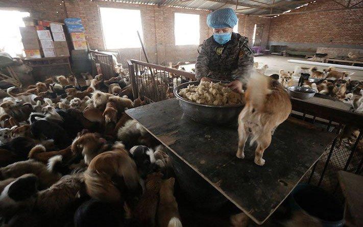 psi v číně pomoc psům v číně podmínky života azyl azyly pro psy čína5