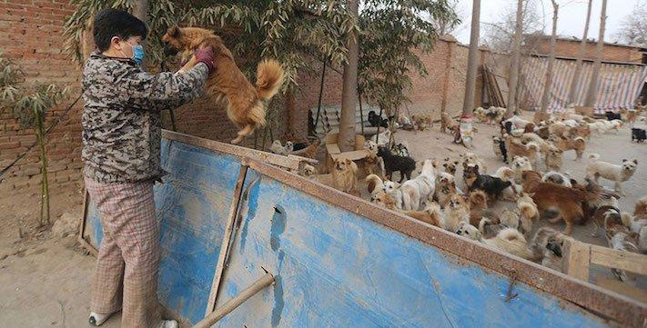 psi v číně pomoc psům v číně podmínky života azyl azyly pro psy čína6
