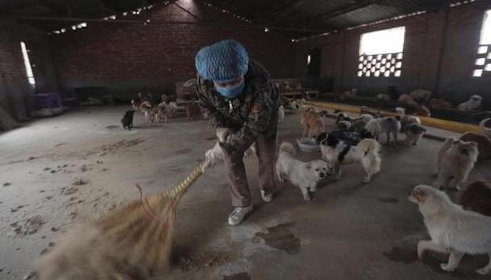 psi v číně pomoc psům v číně podmínky života azyl azyly pro psy čína8