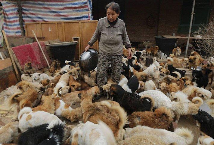 psi v číně pomoc psům v číně podmínky života azyl azyly pro psy čína7