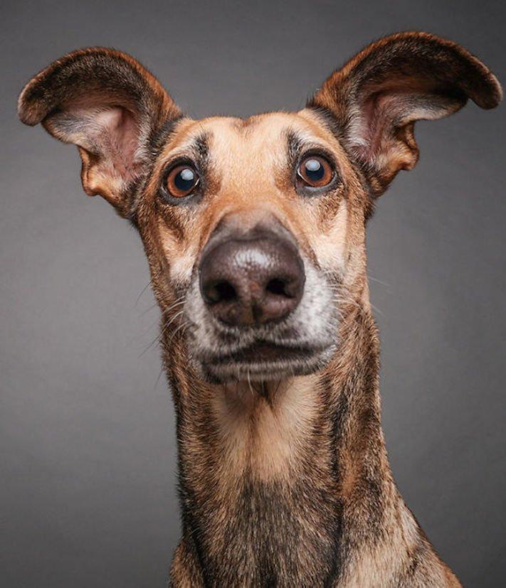 nejlepší psí obrázky psů tázací pohled mimika psa pes se ptá 1