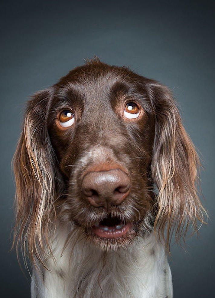 nejlepší psí obrázky psů tázací pohled mimika psa pes se ptá2