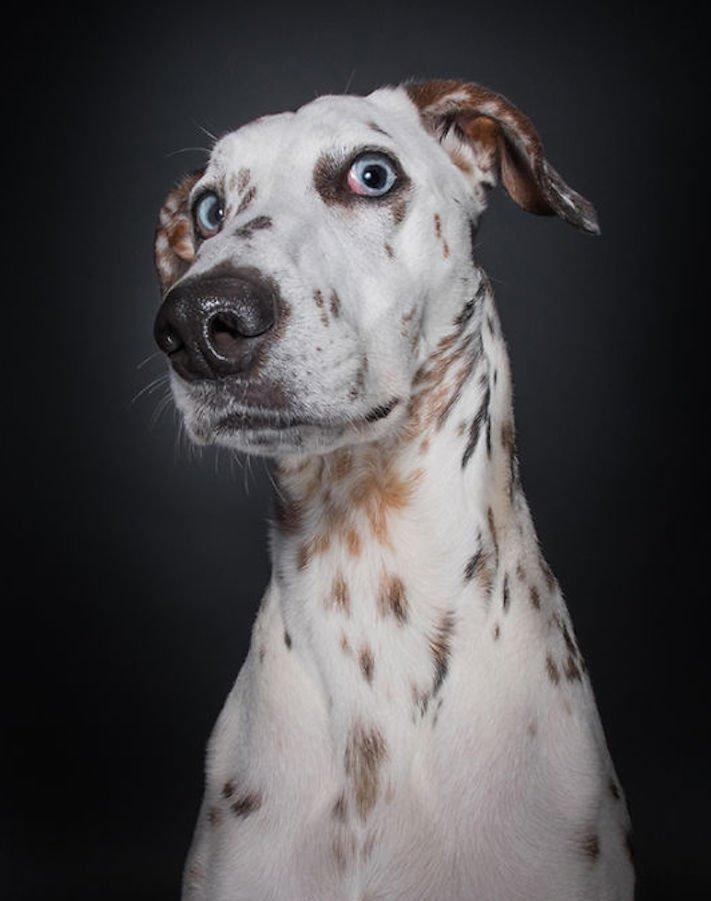 nejlepší psí obrázky psů tázací pohled mimika psa pes se ptá3