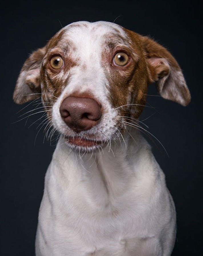 nejlepší psí obrázky psů tázací pohled mimika psa pes se ptá5