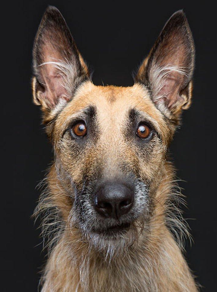 nejlepší psí obrázky psů tázací pohled mimika psa pes se ptá6