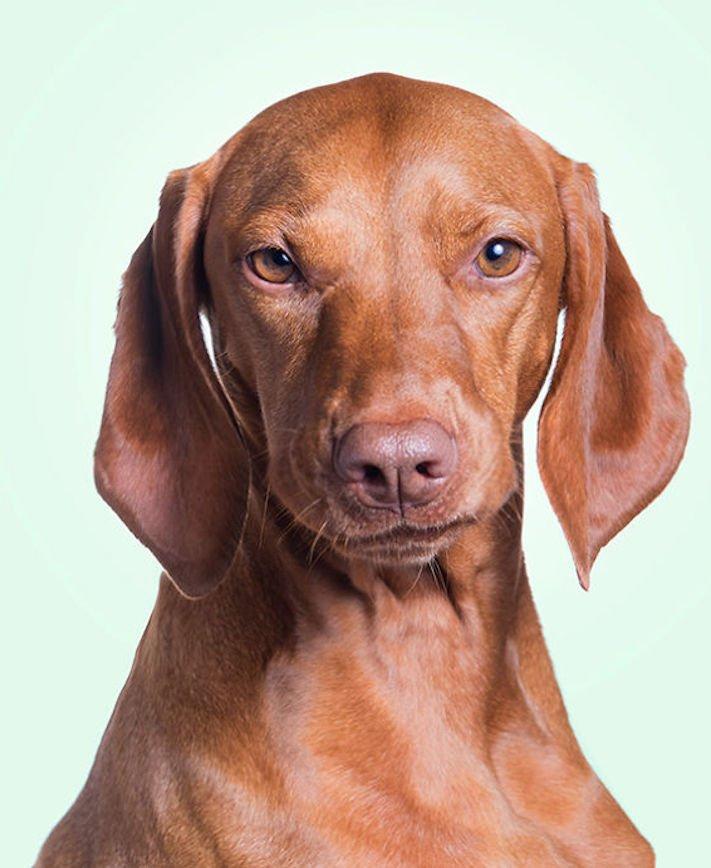 nejlepší psí obrázky psů tázací pohled mimika psa pes se ptá7
