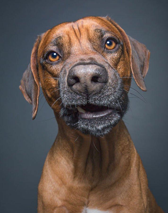 nejlepší psí obrázky psů tázací pohled mimika psa pes se ptá8
