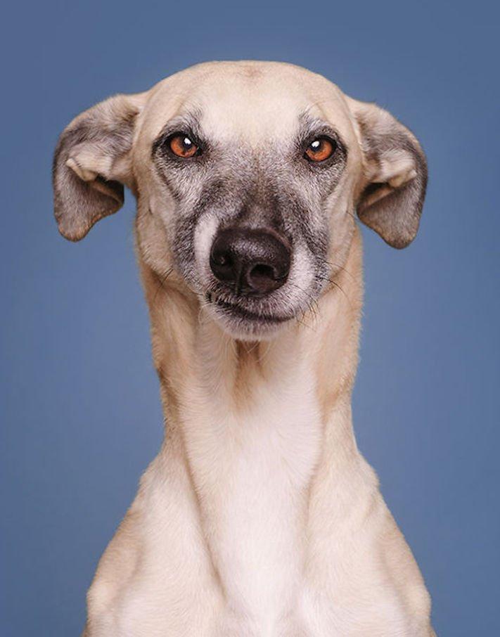 nejlepší psí obrázky psů tázací pohled mimika psa pes se ptá9