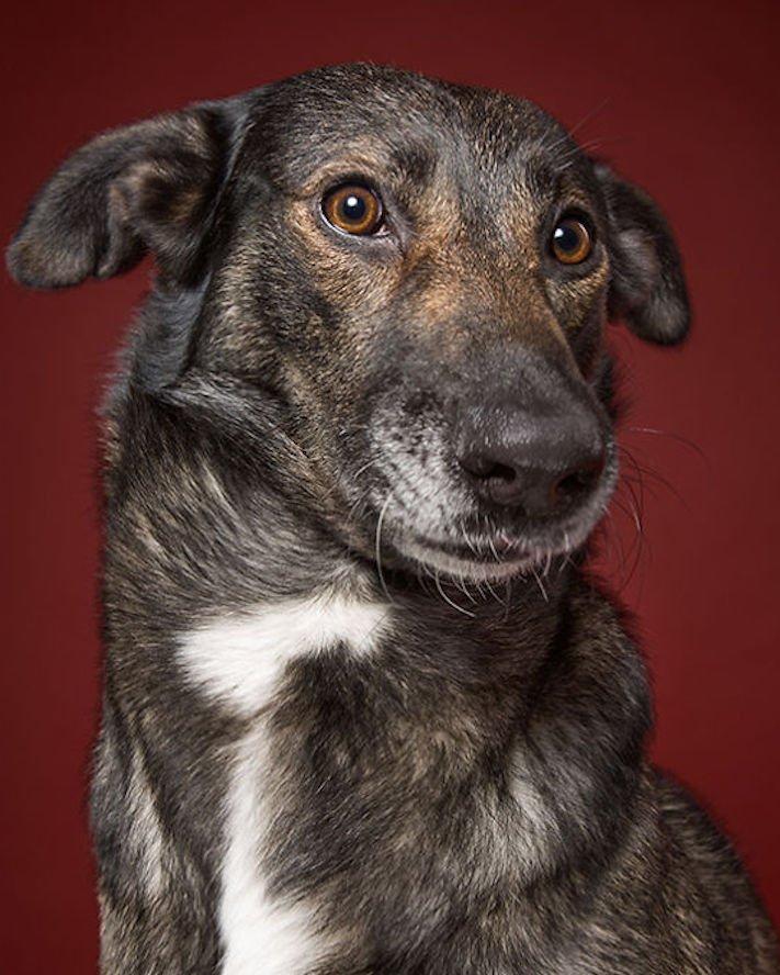 nejlepší psí obrázky psů tázací pohled mimika psa pes se ptá10