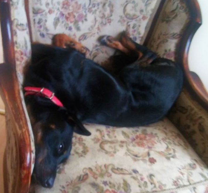 nejzajímavější nejoriginální psí obrázky fotografie psů zvláštní chování a záliby2