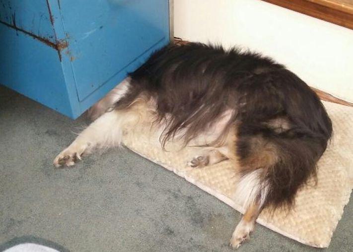 nejzajímavější nejoriginální psí obrázky fotografie psů zvláštní chování a záliby4