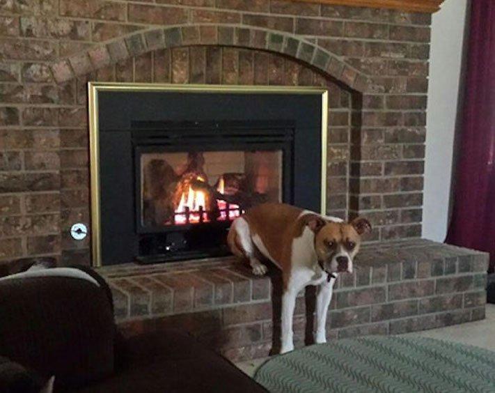 nejzajímavější nejoriginální psí obrázky fotografie psů zvláštní chování a záliby12