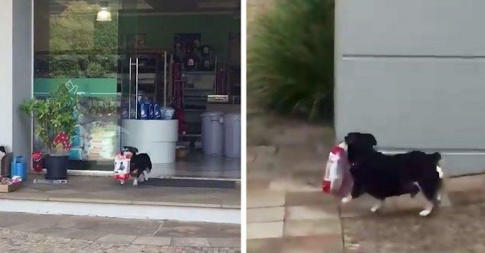 pes chodí sám nakupovat na nákup do obchodu výcvik psa náhled