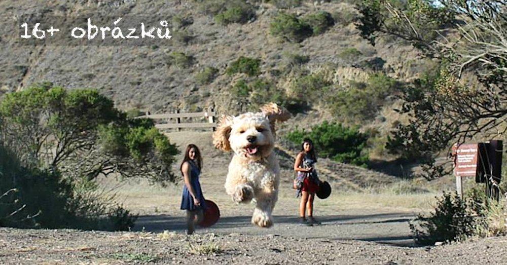 dokonalé skvělé úžasné nejlepší psí momentky obrázky fotografie psů1