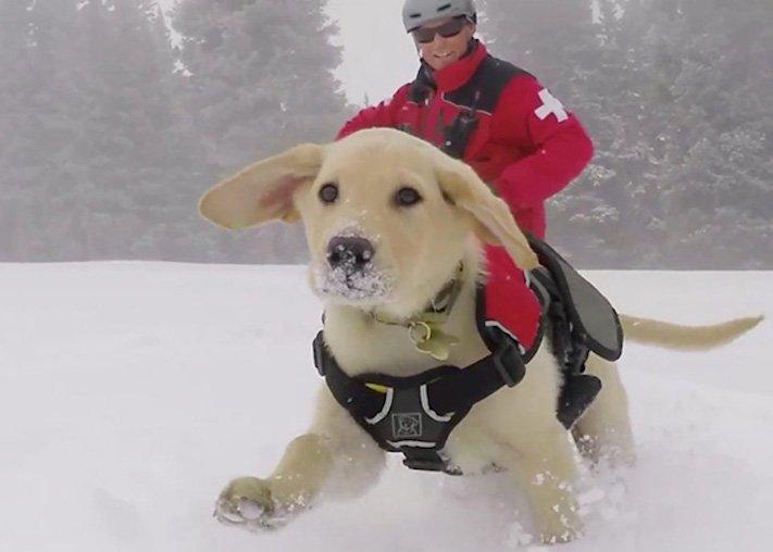 dokonalé skvělé úžasné nejlepší psí momentky obrázky fotografie psů3