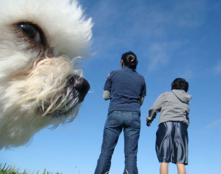 dokonalé skvělé úžasné nejlepší psí momentky obrázky fotografie psů4