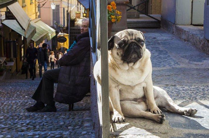 dokonalé skvělé úžasné nejlepší psí momentky obrázky fotografie psů6