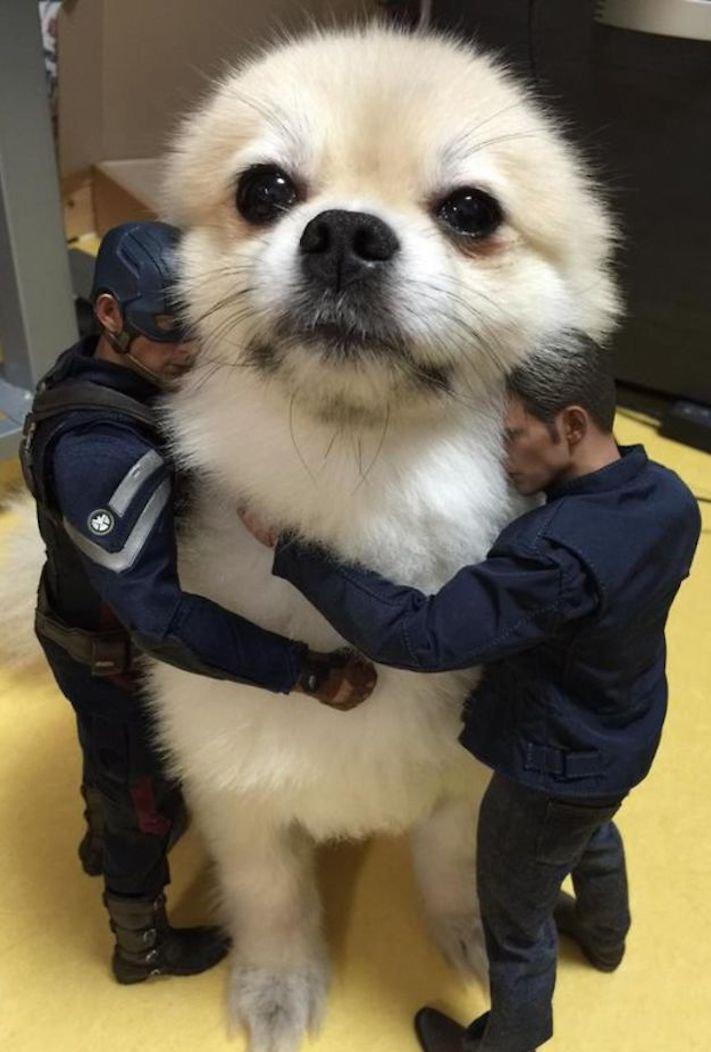dokonalé skvělé úžasné nejlepší psí momentky obrázky fotografie psů7