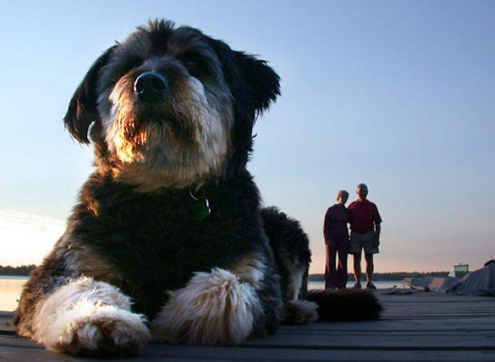dokonalé skvělé úžasné nejlepší psí momentky obrázky fotografie psů8
