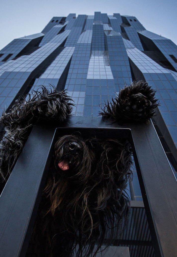 dokonalé skvělé úžasné nejlepší psí momentky obrázky fotografie psů10
