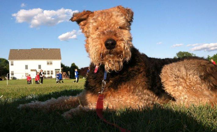dokonalé skvělé úžasné nejlepší psí momentky obrázky fotografie psů13