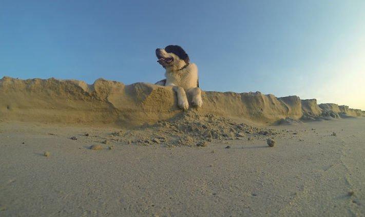 dokonalé skvělé úžasné nejlepší psí momentky obrázky fotografie psů15